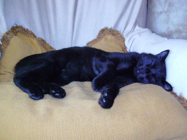 Kawa 2.5ans, handicapé...petit chat ...(presque) parfait^^ Kawa_o13