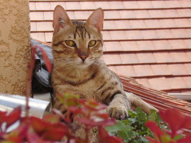 Kiko 1 an abandonné dans la rue avec sa boite de transport Kiko_211