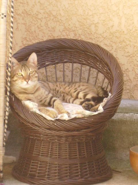 Kiko 1 an abandonné dans la rue avec sa boite de transport Kiko_212