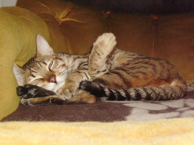 Kiko 1 an abandonné dans la rue avec sa boite de transport Kiko_214