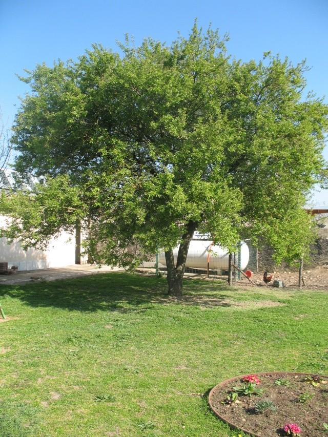 Que planter sous un arbre ? Img_5218