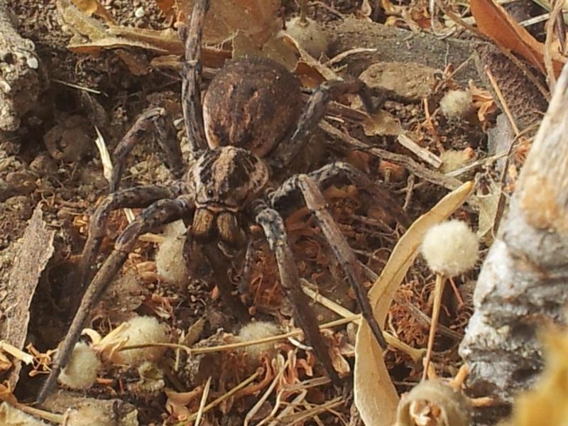 Le fil de l'entomologie - Page 5 20120710