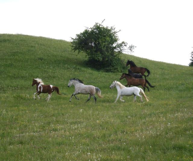 "Concours : ""cheval au galop"" GAGNANTE : TItâne P5020013"
