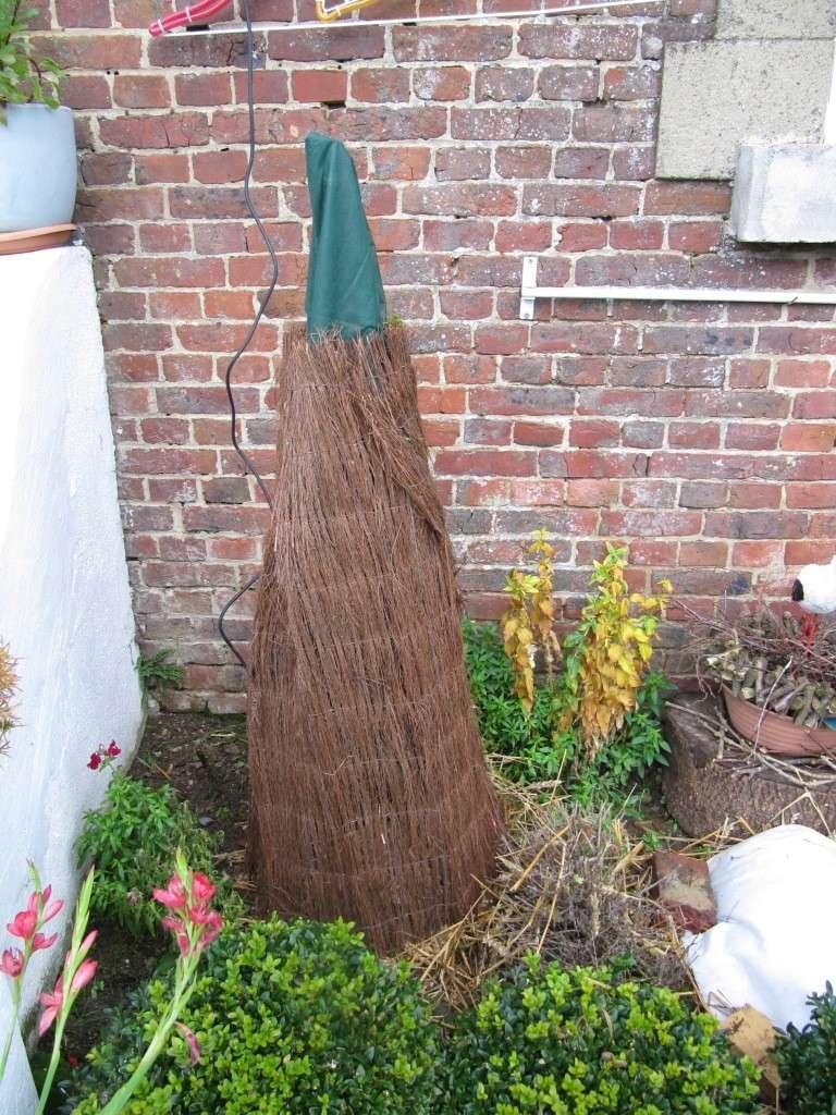 comment on protège les plantes contre le froid 00813