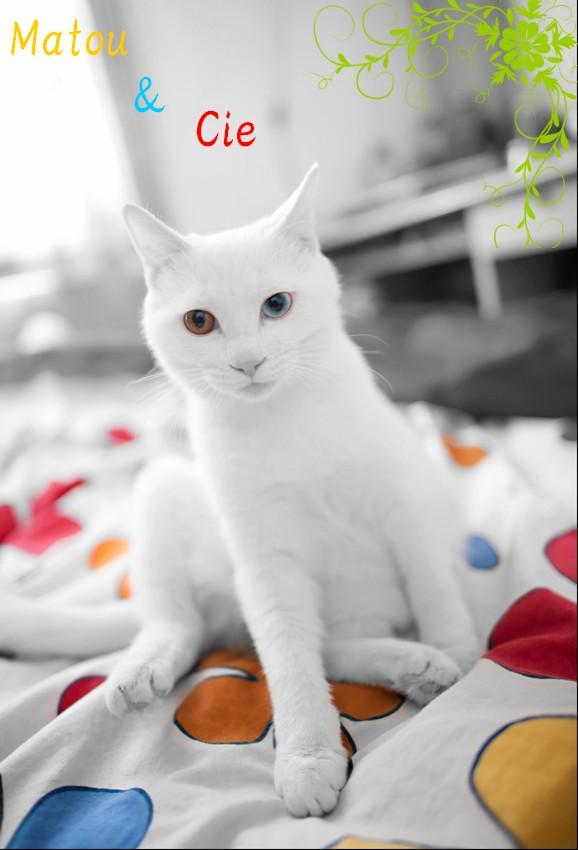 Nouveau désign ?? Cats_610