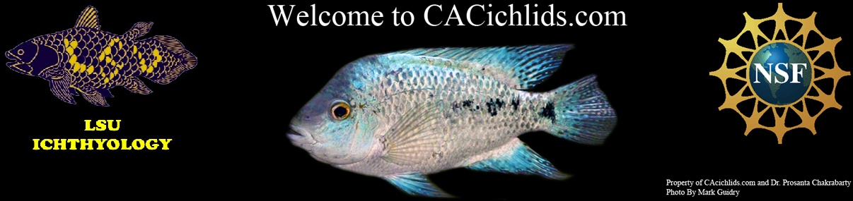 Central American Cichlid Research