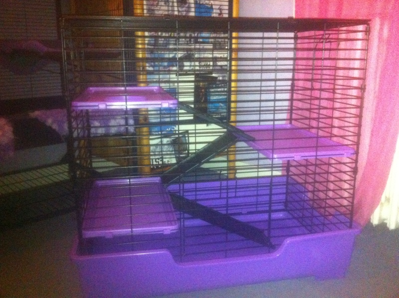 Cage Super Pet Deluxe 4 level Care Critter Home Noire/Violette Img_0811