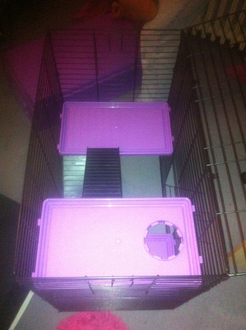 Cage Super Pet Deluxe 4 level Care Critter Home Noire/Violette Img_0812