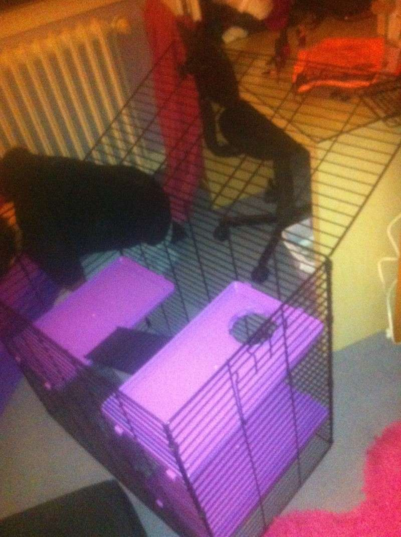Cage Super Pet Deluxe 4 level Care Critter Home Noire/Violette Img_0813