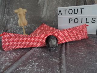 Atout Poils Dscn6410