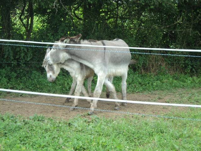 UGO (UGOo) - Âne né en 2008 - Adopté en décembre 2010 par Gisle - Page 4 Dsc02019