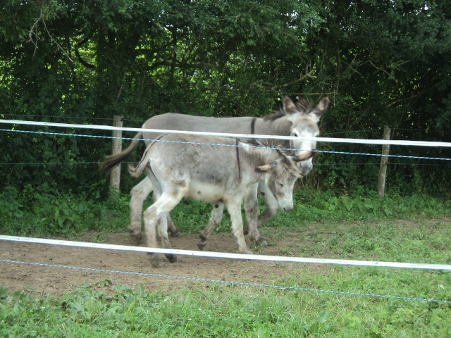 UGO (UGOo) - Âne né en 2008 - Adopté en décembre 2010 par Gisle - Page 4 Dsc02021