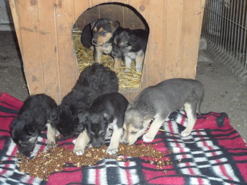SOS pour le refuge de LENUTA en Roumanie - Page 2 01111