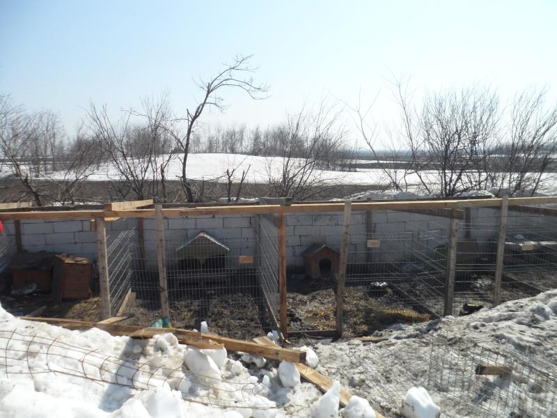 SOS pour le refuge de LENUTA en Roumanie - Page 2 15_11294