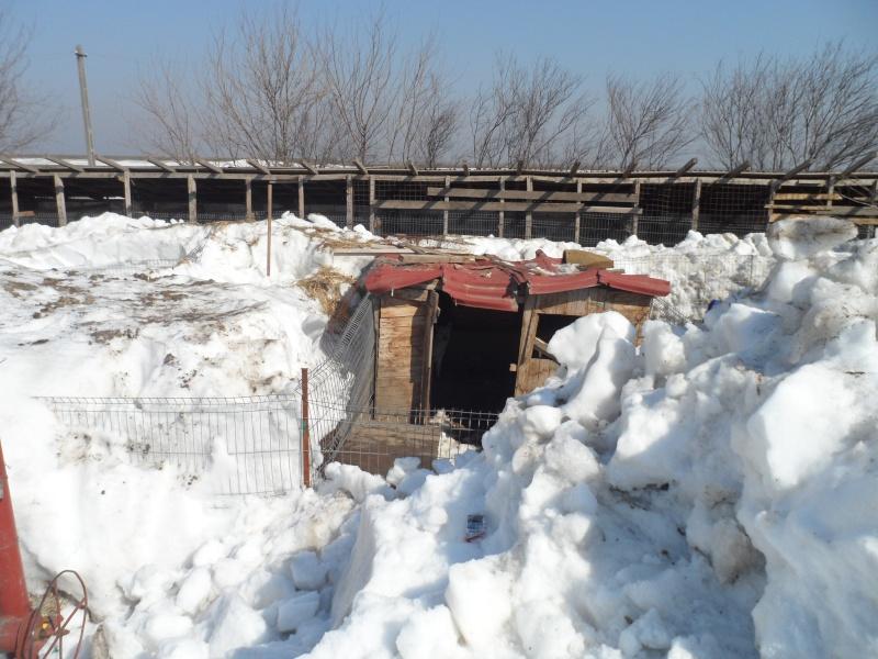 SOS pour le refuge de LENUTA en Roumanie - Page 2 15_11300