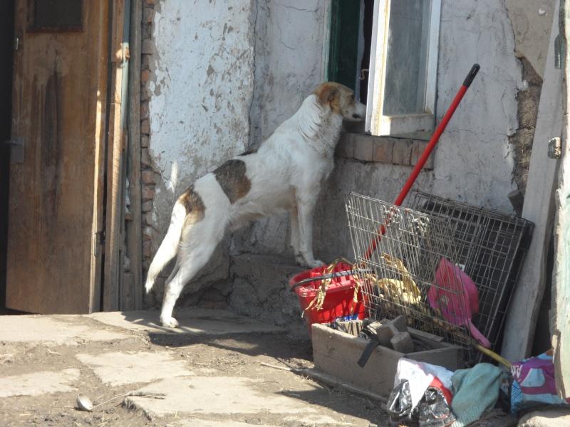 IAGOO FILS DE GEORGICA ET D'ANOUSHKA, né le 20 Aout 2010, parrainé par Babsu -SC-LBC- R- SOS -  15_11525