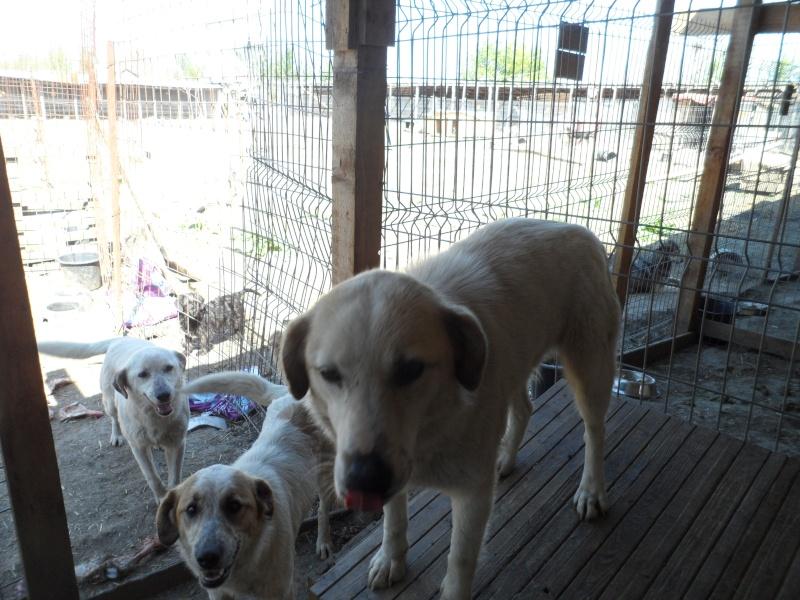 fata - FATA, née le 12/06/2009, arrivée chiot au refuge (soeur de Mickey et fille de Tara) - en FA dans le 49 - GARANT - SOS -R-FB-SC-30MA 15_11536
