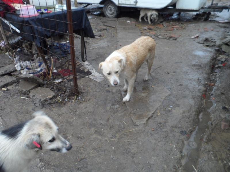 SOS pour le refuge de LENUTA en Roumanie - Page 2 Elena_11