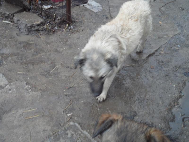 SOS pour le refuge de LENUTA en Roumanie - Page 2 Elena_12