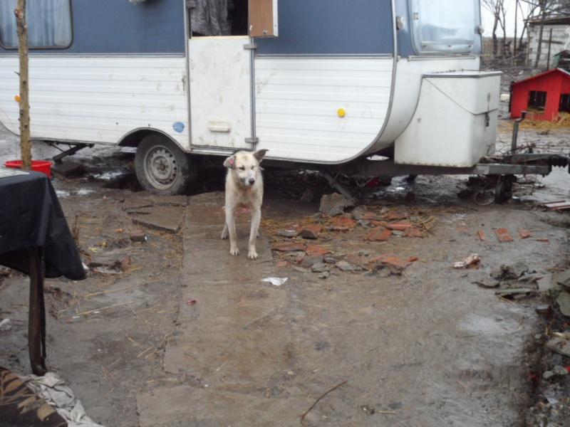 SOS pour le refuge de LENUTA en Roumanie - Page 2 Elena_13