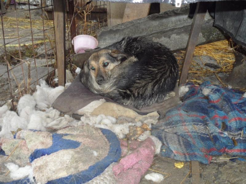 SOS pour le refuge de LENUTA en Roumanie - Page 2 Elena_14