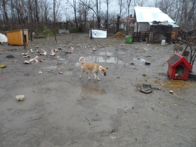 SOS pour le refuge de LENUTA en Roumanie - Page 2 Elena_21