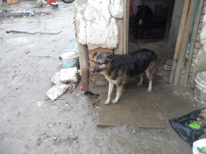 SOS pour le refuge de LENUTA en Roumanie - Page 2 Elena_22