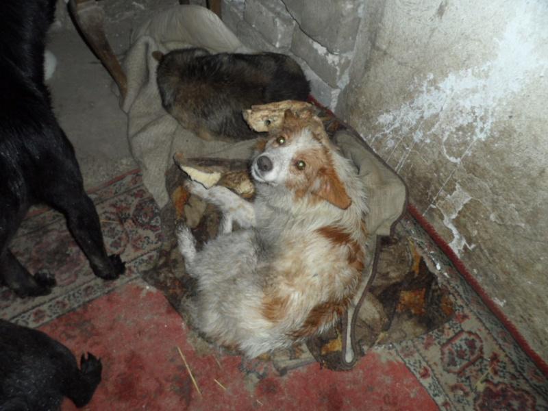 SOS pour le refuge de LENUTA en Roumanie - Page 2 Elena_24