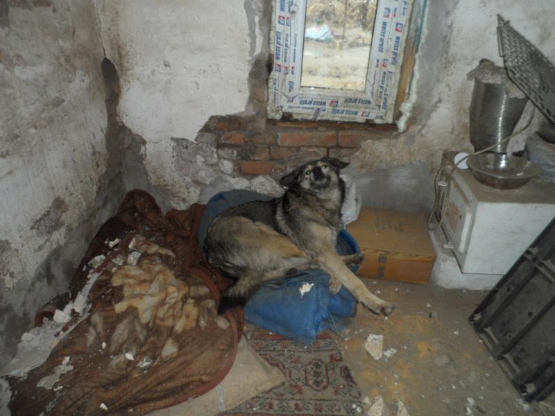 SOS pour le refuge de LENUTA en Roumanie - Page 2 Elena_25