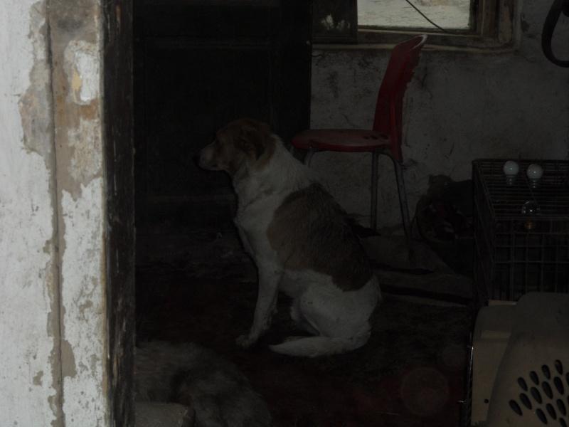 SOS pour le refuge de LENUTA en Roumanie - Page 2 Elena_26