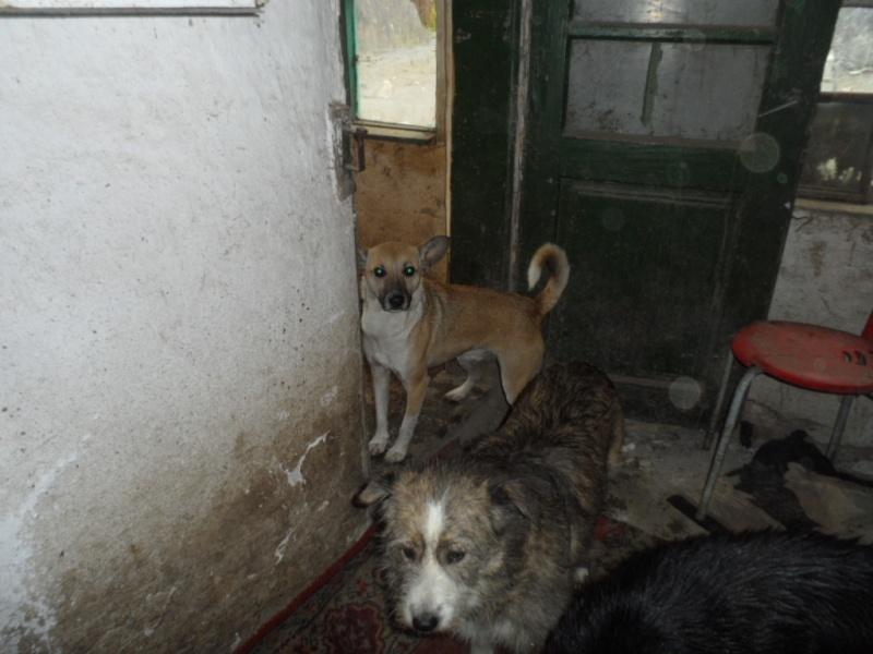 SOS pour le refuge de LENUTA en Roumanie - Page 2 Elena_27