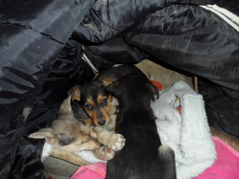 SOS pour le refuge de LENUTA en Roumanie - Page 2 Elena_29