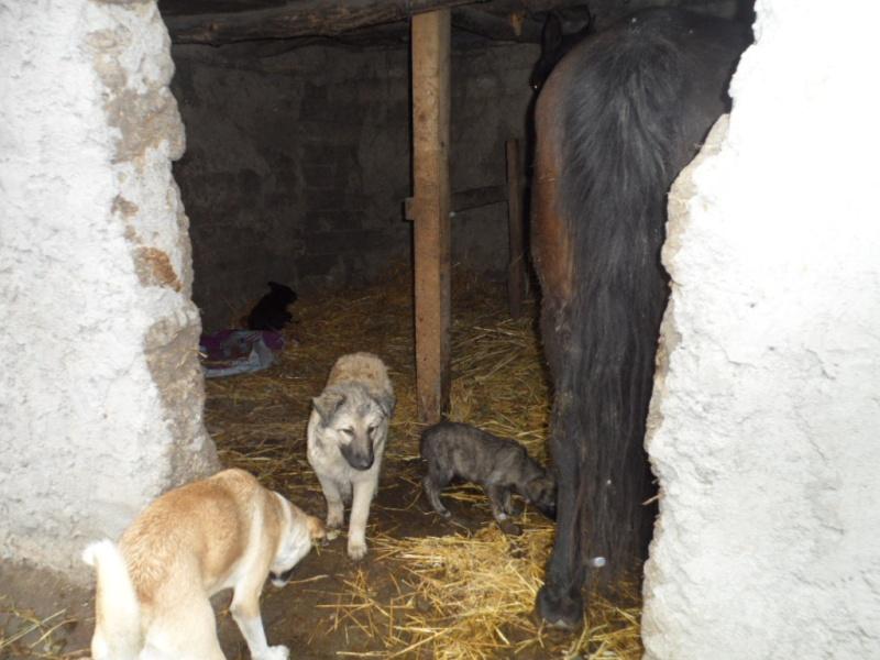 SOS pour le refuge de LENUTA en Roumanie - Page 2 Elena_30