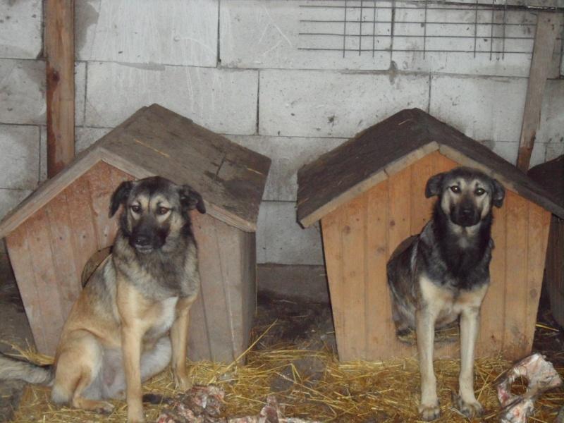 SOS pour le refuge de LENUTA en Roumanie - Page 2 Elena_37