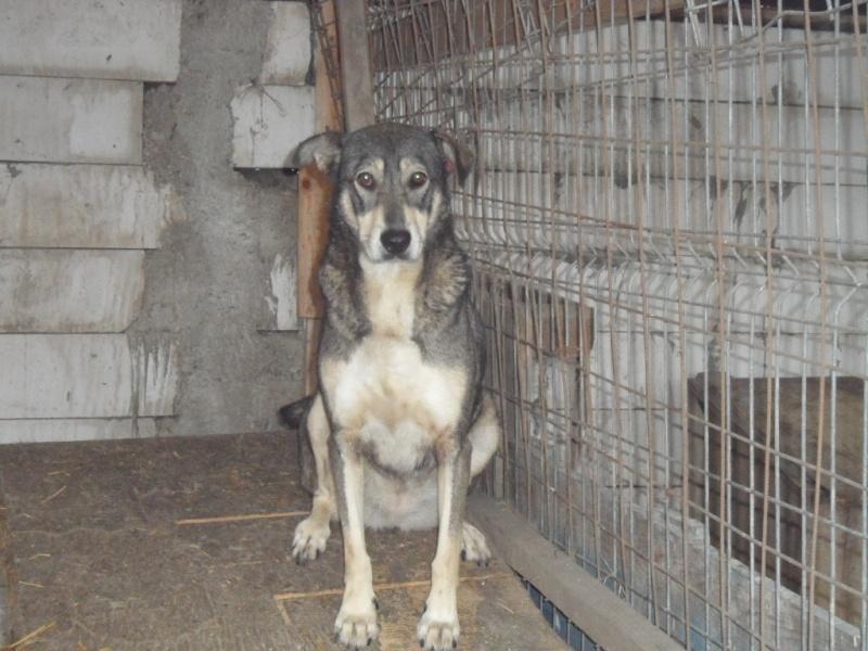 SOS pour le refuge de LENUTA en Roumanie - Page 2 Elena_44