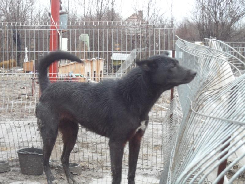 SOS pour le refuge de LENUTA en Roumanie - Page 2 Elena_45