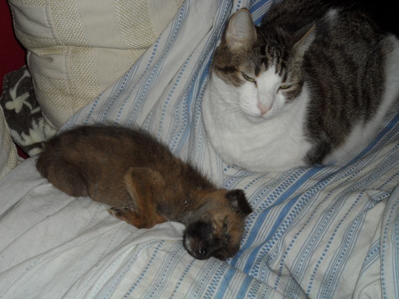 URGENCE POUR MICKEY - chat mâle de 7 ans, un pot de colle Iulie267