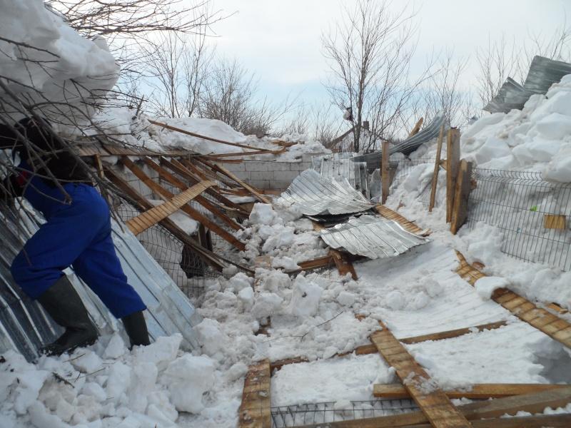 SOS pour le refuge de LENUTA en Roumanie - Page 2 Pictu123