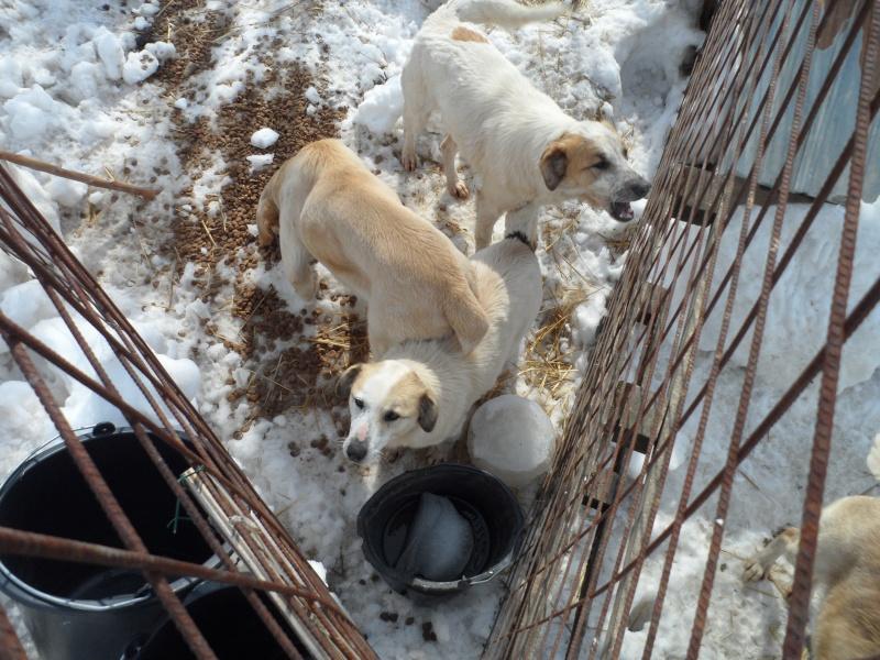 SOS pour le refuge de LENUTA en Roumanie - Page 2 Pictu130