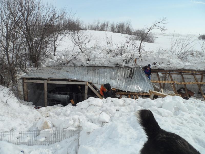 SOS pour le refuge de LENUTA en Roumanie - Page 2 Pictu133