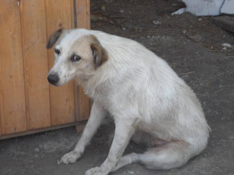 fata - FATA, née le 12/06/2009, arrivée chiot au refuge (soeur de Mickey et fille de Tara) - en FA dans le 49 - GARANT - SOS -R-FB-SC-30MA Pictu489