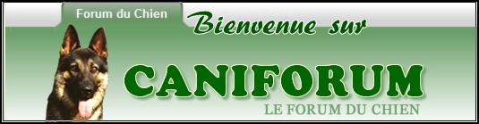 Breton - Des petits Bretons nouveaux !!! Cani_b10