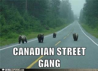 Canadian Street Gangs Canadi10
