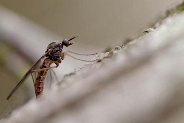 """Je l'ai appelé """"Le moustique"""" _dsc0121"""