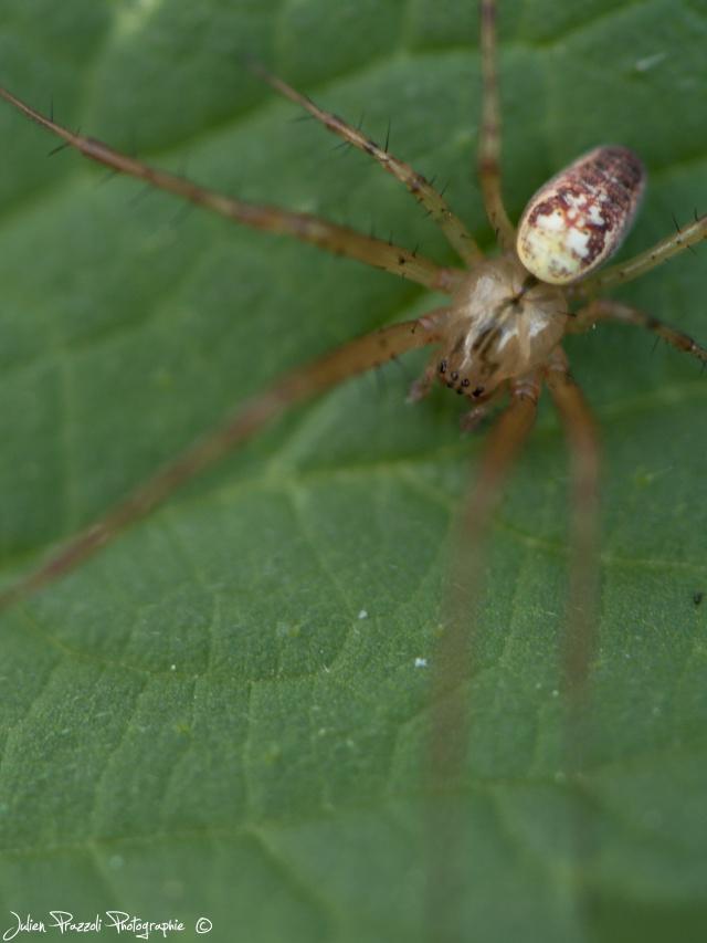 Essai pdc araignée Dsc_0022