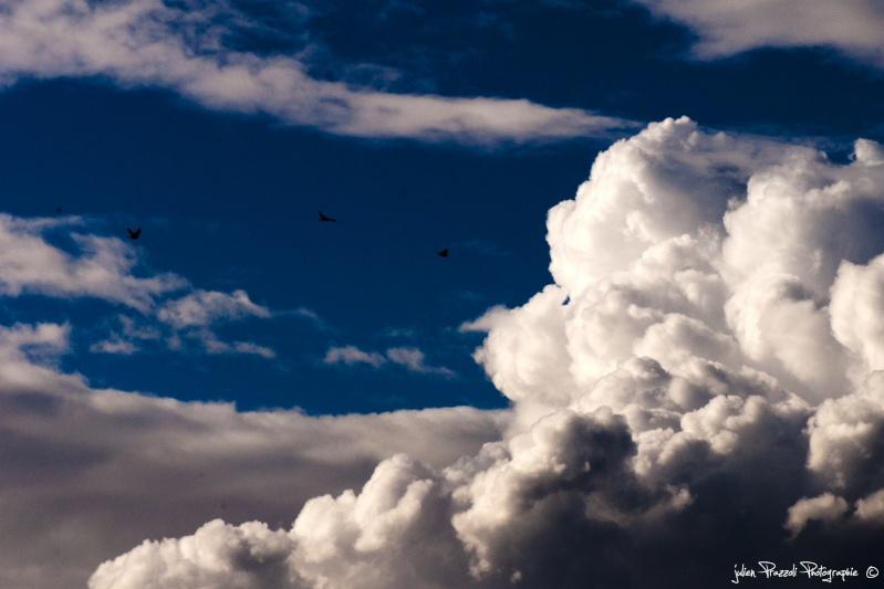 Julien St Cloud Dsc_0214