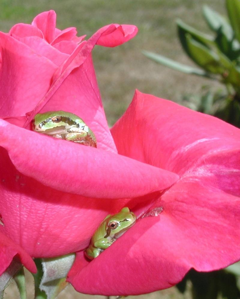 pretty sights found while walking thru the garden 07_30_10