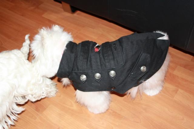 """Le groupe des """"mon chien a un manteau mais je n'assume pas"""" anonymes Img_2721"""