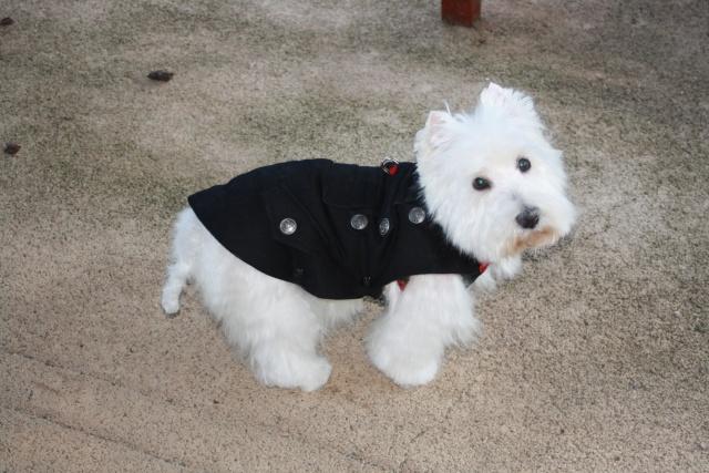 """Le groupe des """"mon chien a un manteau mais je n'assume pas"""" anonymes Img_2722"""