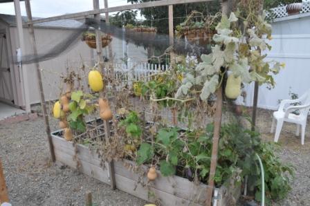 vertical gardening structures Dsc_1611